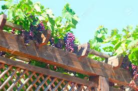 pergola avec vigne